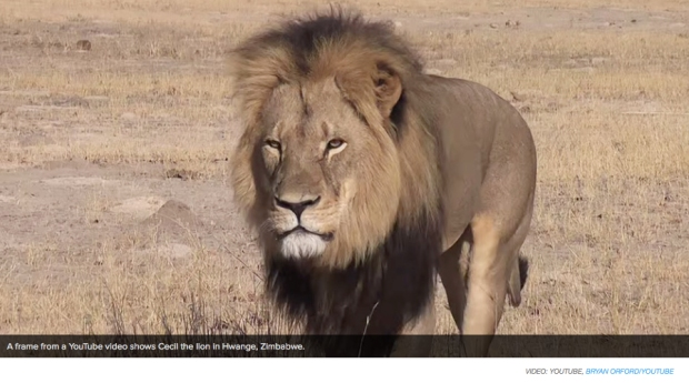 Cecil the Lion photo