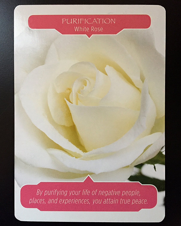 white rose card reading