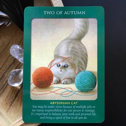 2_Autumn_Tarot_choices